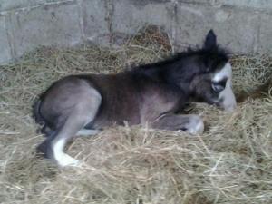 Pablo's horse
