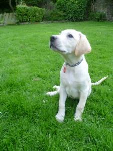 Murphy in the field